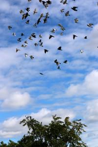 Flying Rats 10