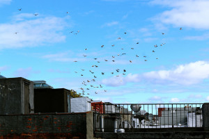 Flying Rats 12