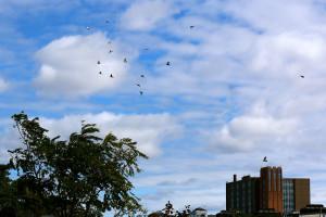 Flying Rats 13