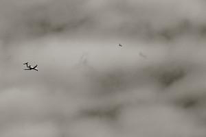 Flying Rats 2
