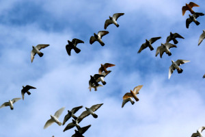 Flying Rats 3