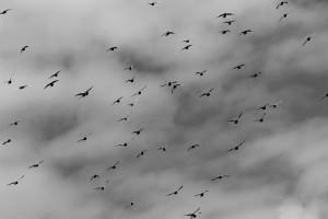 Flying Rats 4
