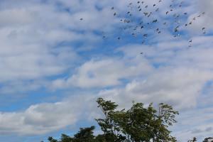 Flying Rats 6