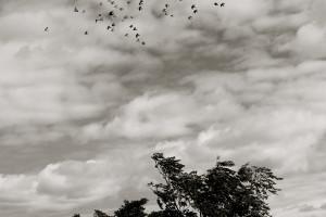 Flying Rats 7